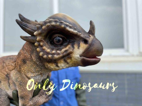 The head of Stygimoloch