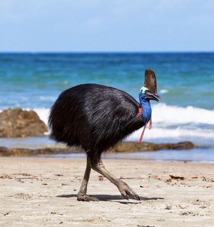 a black bird walking beside the sea