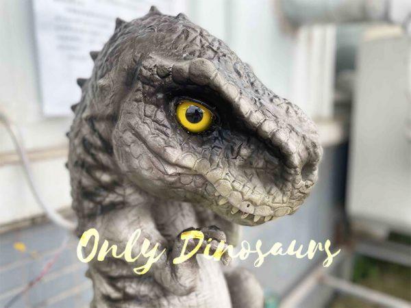 eet Grey Baby T-Rex