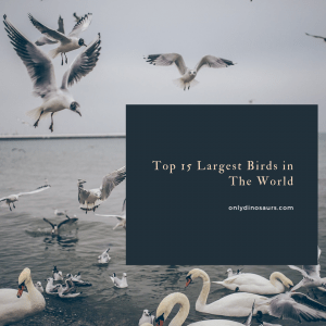 Top 15 Largest Birds in The World