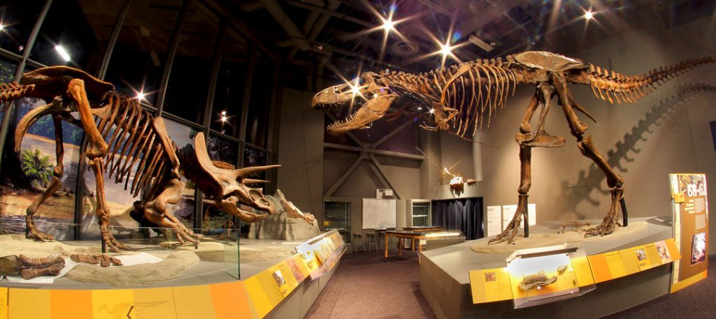 museum displays of a Triceratops fossil on the left and a T. rex fossil on the right with a walkway in the middle