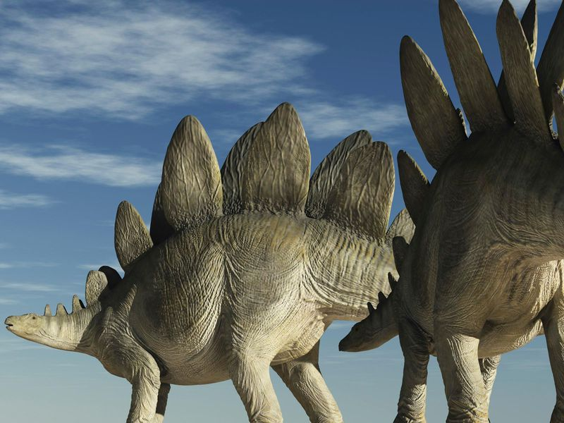Two Stegosaurus with a Blue Sky Bcakground