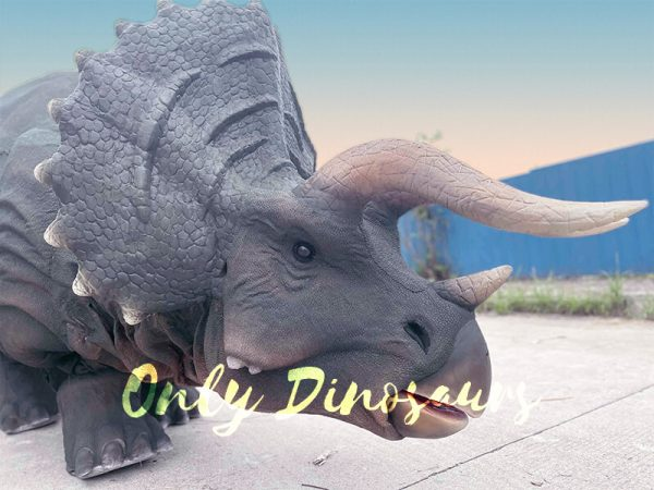 The Head of Triceratops