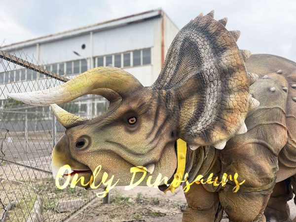 The Head if Triceratops