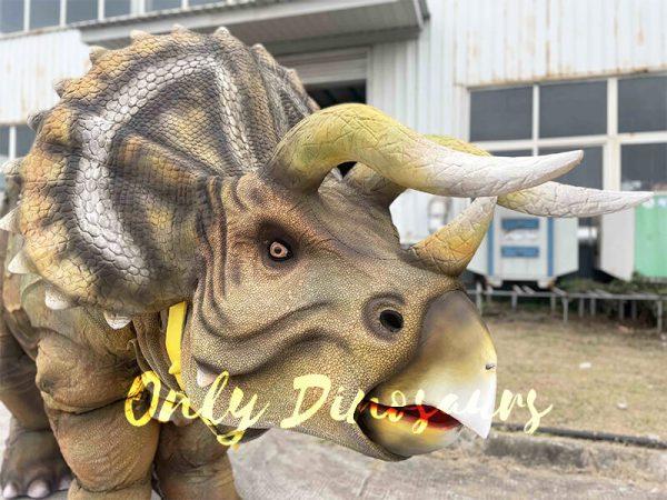 Lifelike Triceratops Craft