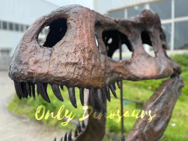 A Fiberglass Dinosaur Skull Fossil on a Shelf