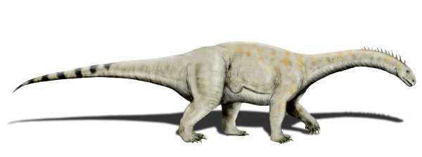 an illustration of a small long-necked gray dinosaur
