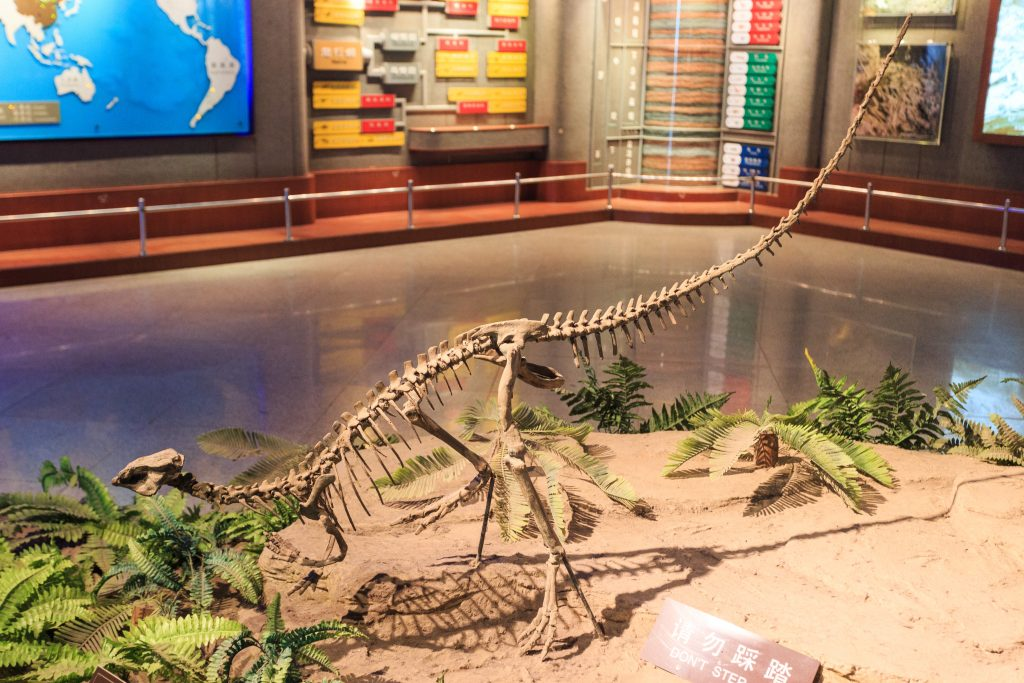 fossil replica of a small long dinosaur on display beside leaves