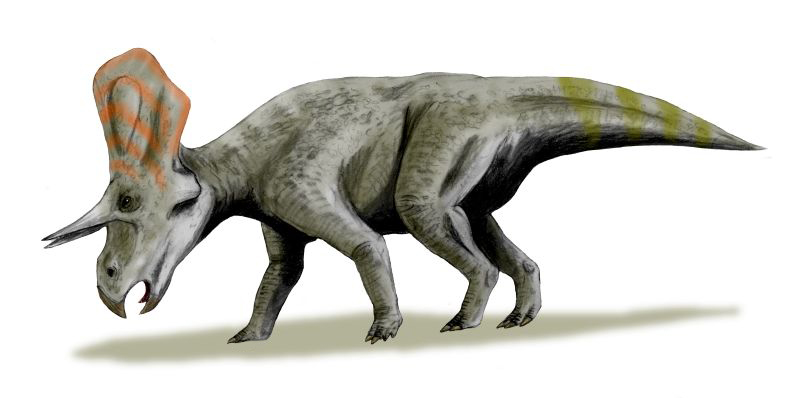 graphic art of a gray dinosaur with an elongated frill