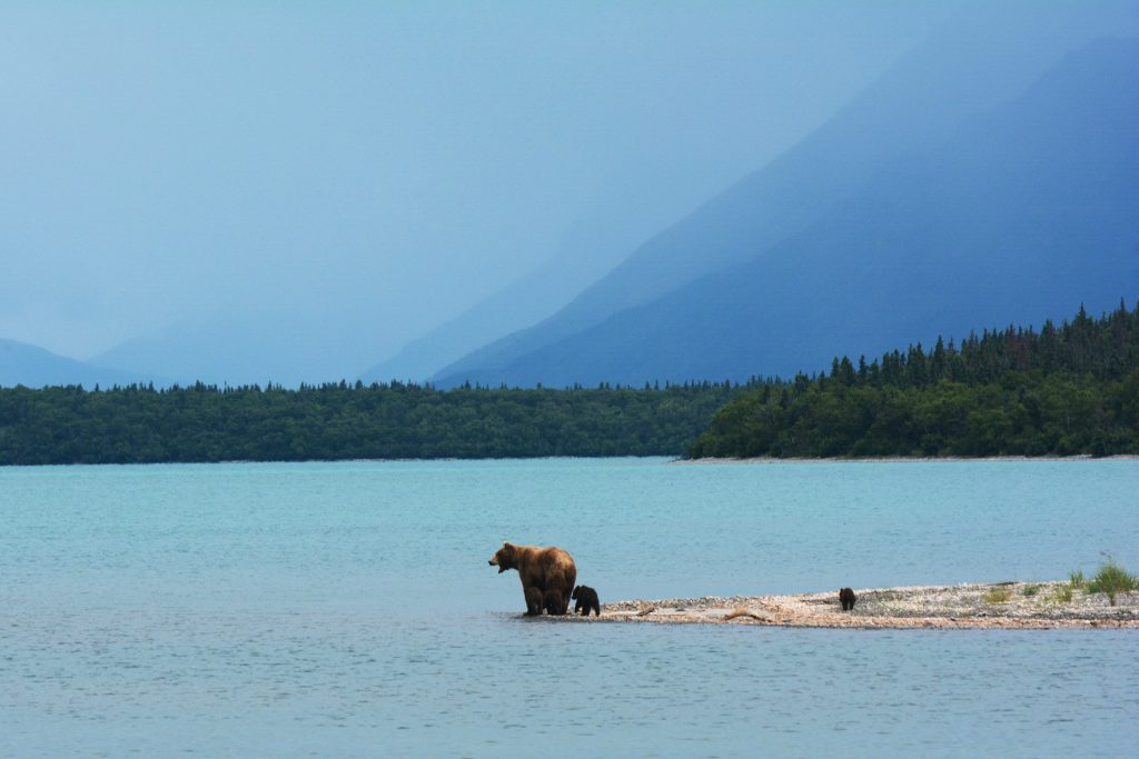 a bear with her cubs standing beside a body of water with forests and mountains in the background