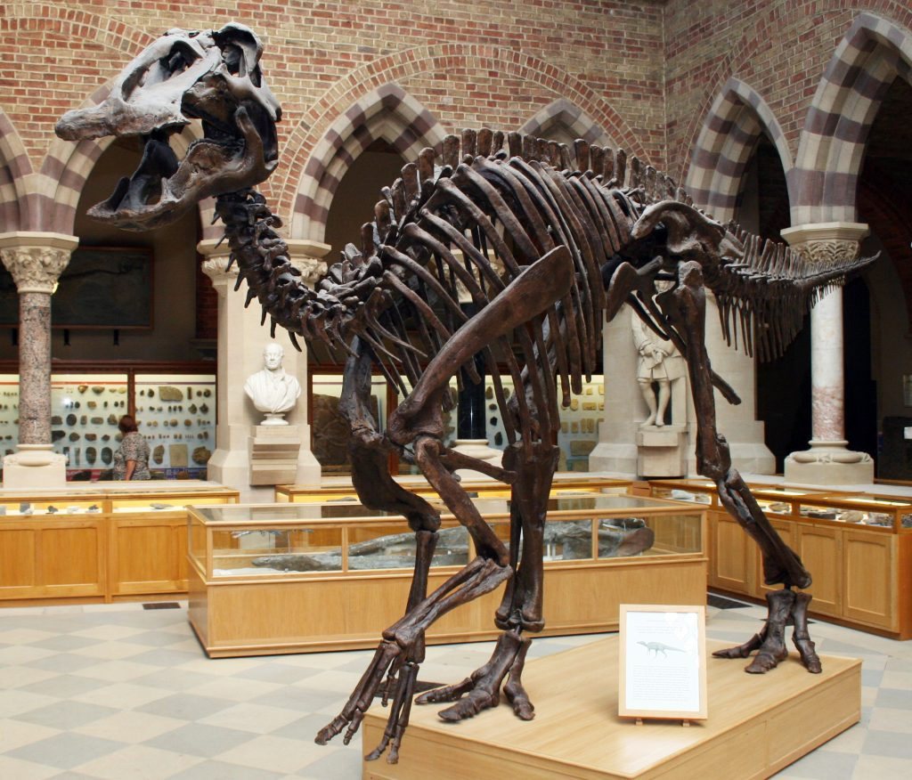 a dinosaur skeleton with a billed mouth on display