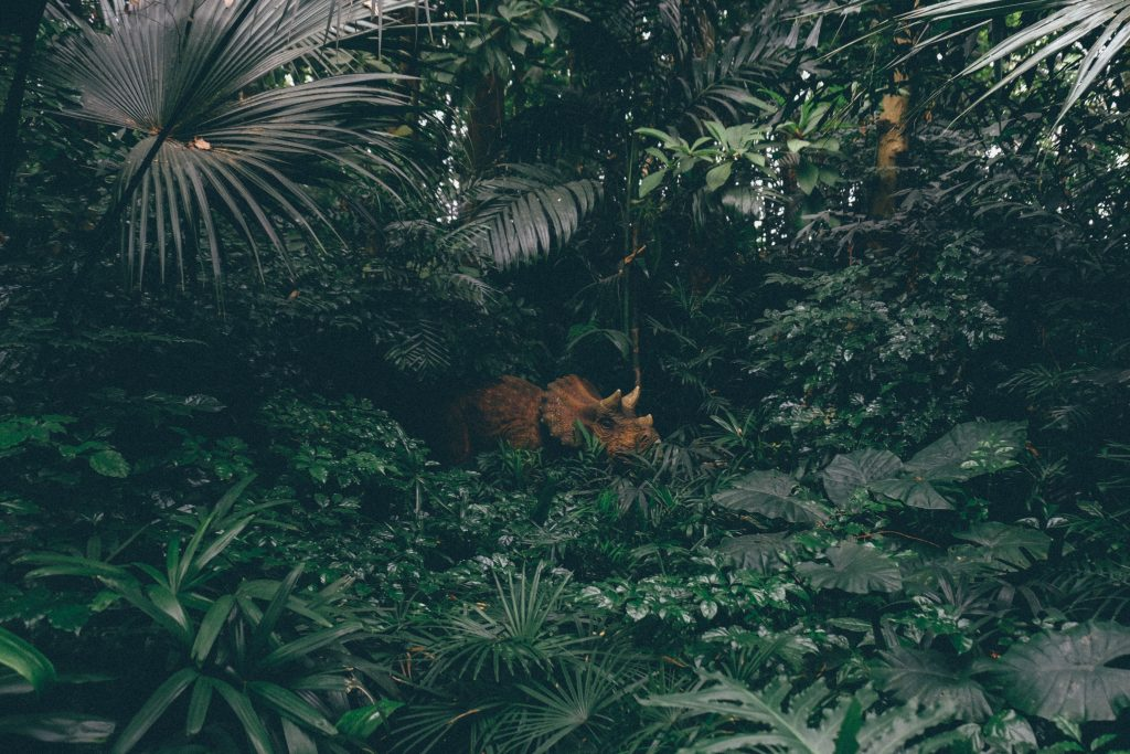 an orange-brown triceratops in the middle of green plants