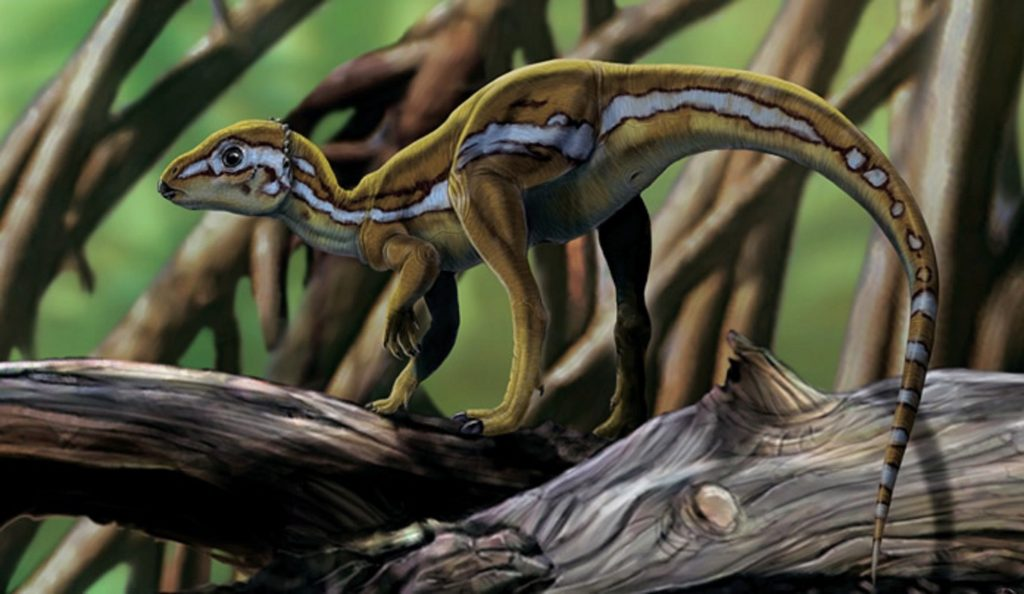 graphic art of a brown dinosaur with a black and white stripe on its back