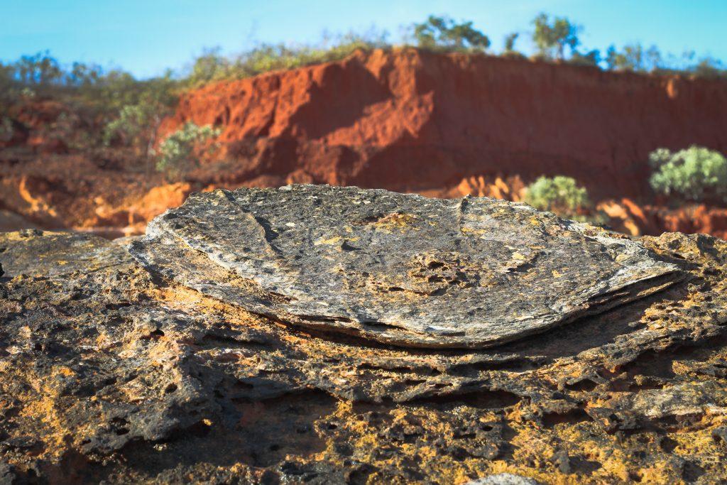 dinosaur footprint on a stone in Broome, Australia