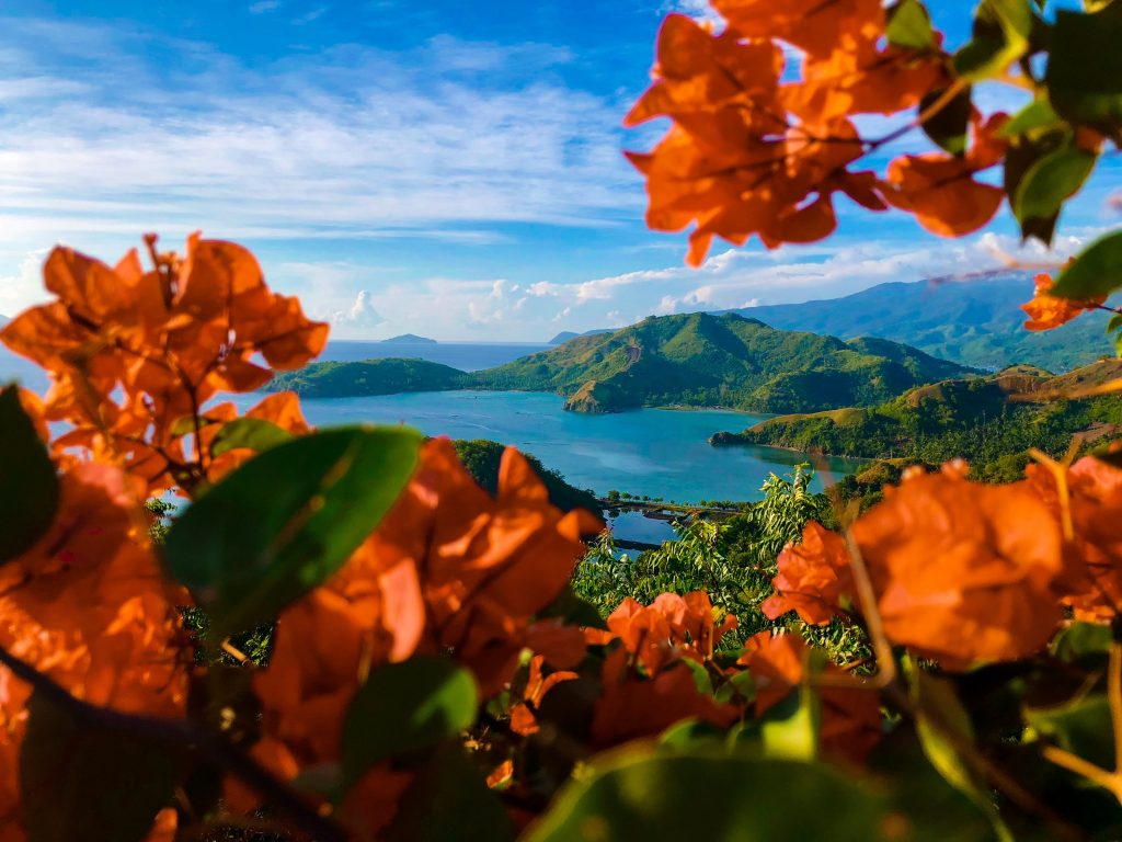 land surrounded by a body of water with orange flowers in the foreground