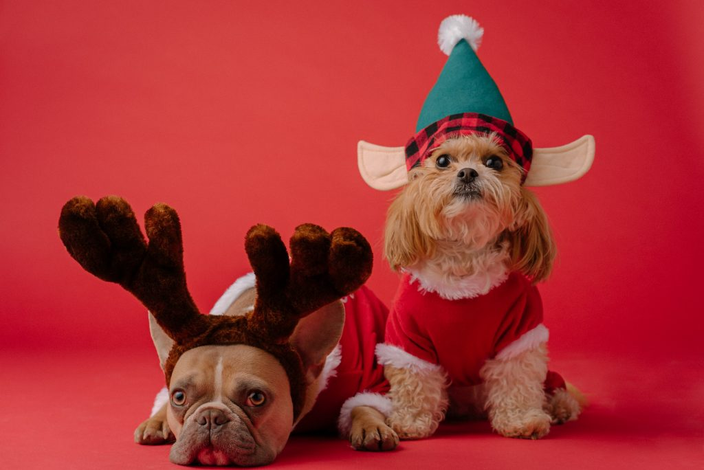 two brown dogs wearing a reindeer costume and an elf costume