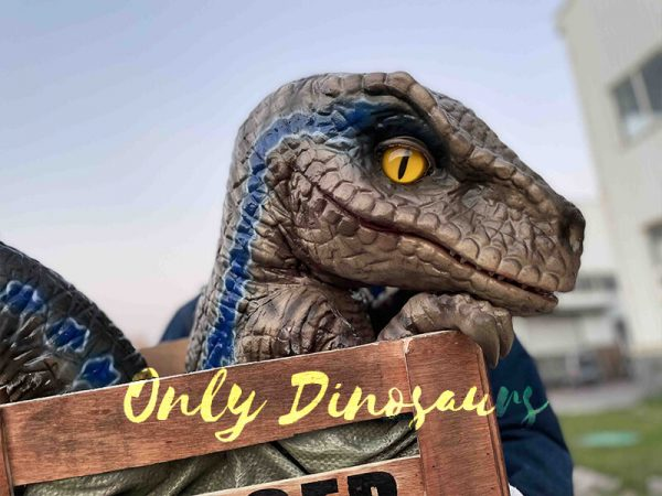 Adorable Crate Raptor Dinosaur Puppet for Kids4