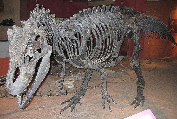 Allosaurus fossil