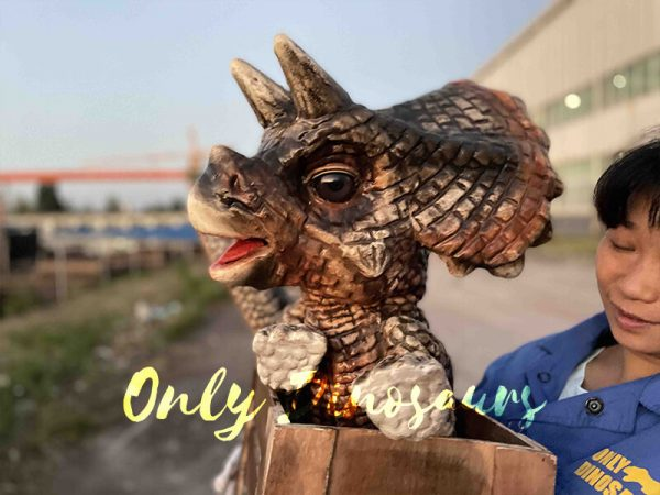 Crate Baby Triceratops Dino Puppet for Sale3