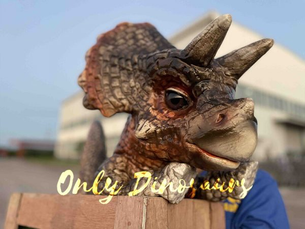 Crate Baby Triceratops Dino Puppet for Sale5
