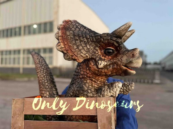 Crate Baby Triceratops Dino Puppet for Sale6
