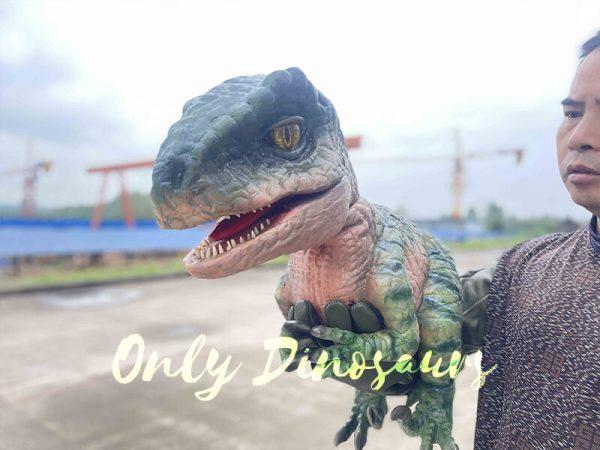 Cute Green Baby Raptor Dino Puppet5 4