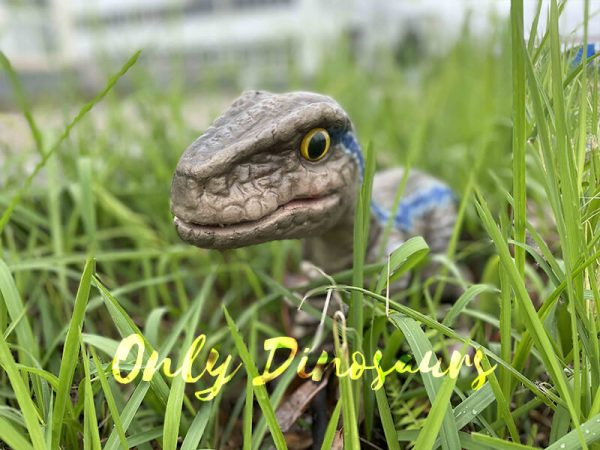 Cute Mini Baby Raptor Hand Puppet For Kids5