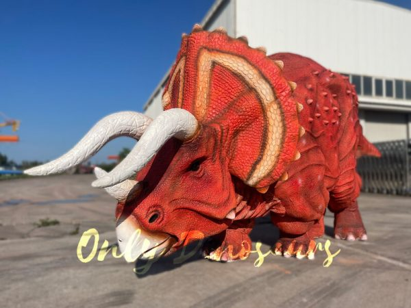 A red triceratops on the ground