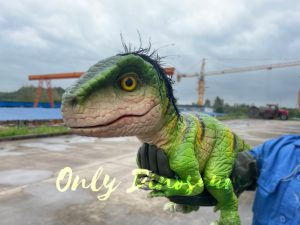 False Arm Green Feathered Baby Raptor Puppet