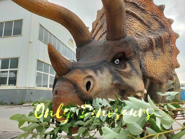 A Triceratops Eating Leafs