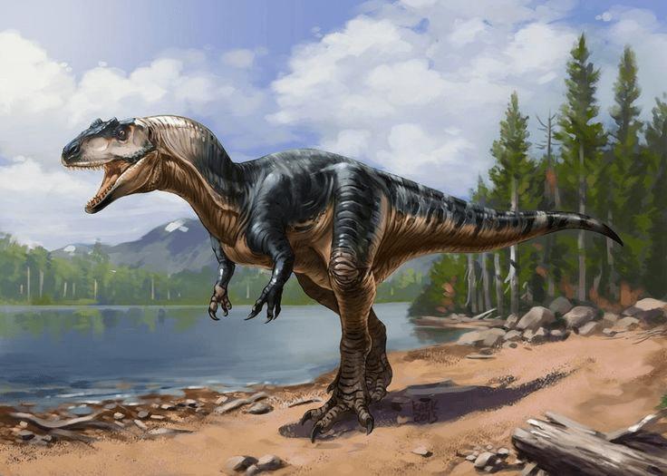 Allosaurus illustrations