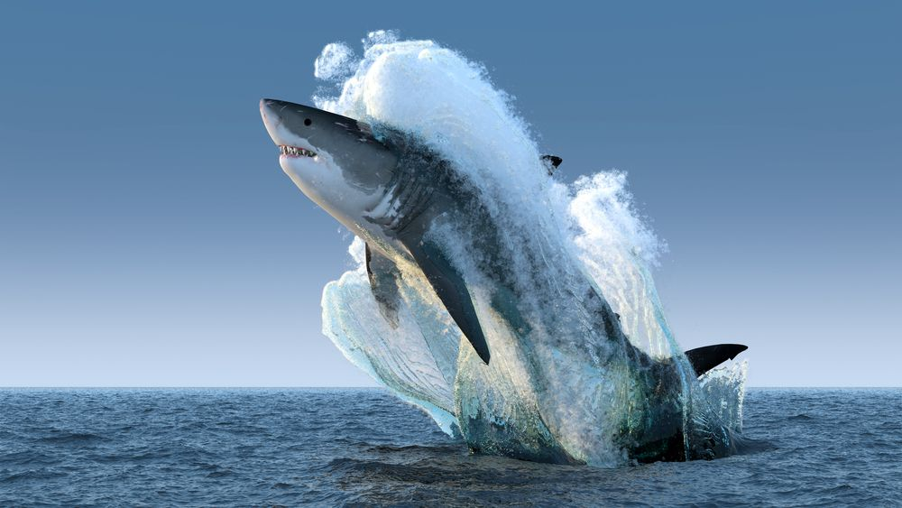 a shark jumping in the sea