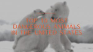 Top 10 Most Dangerous Animals in the United States