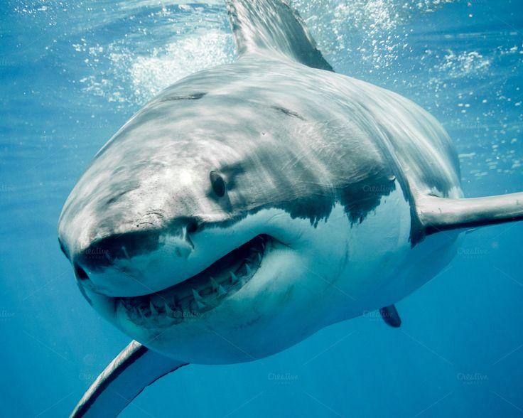 a shark in the sea