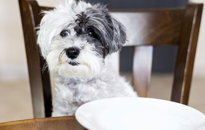 Benefits of a Homemade Dog Food Recipe Diet