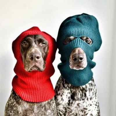 dogs style6