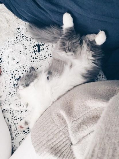 chaton-câlin