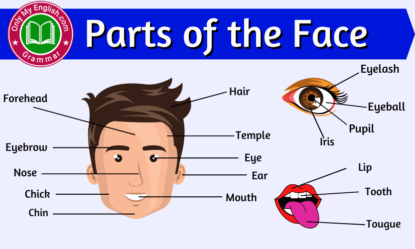 Parts of the Face: Face Parts Names with Pictures
