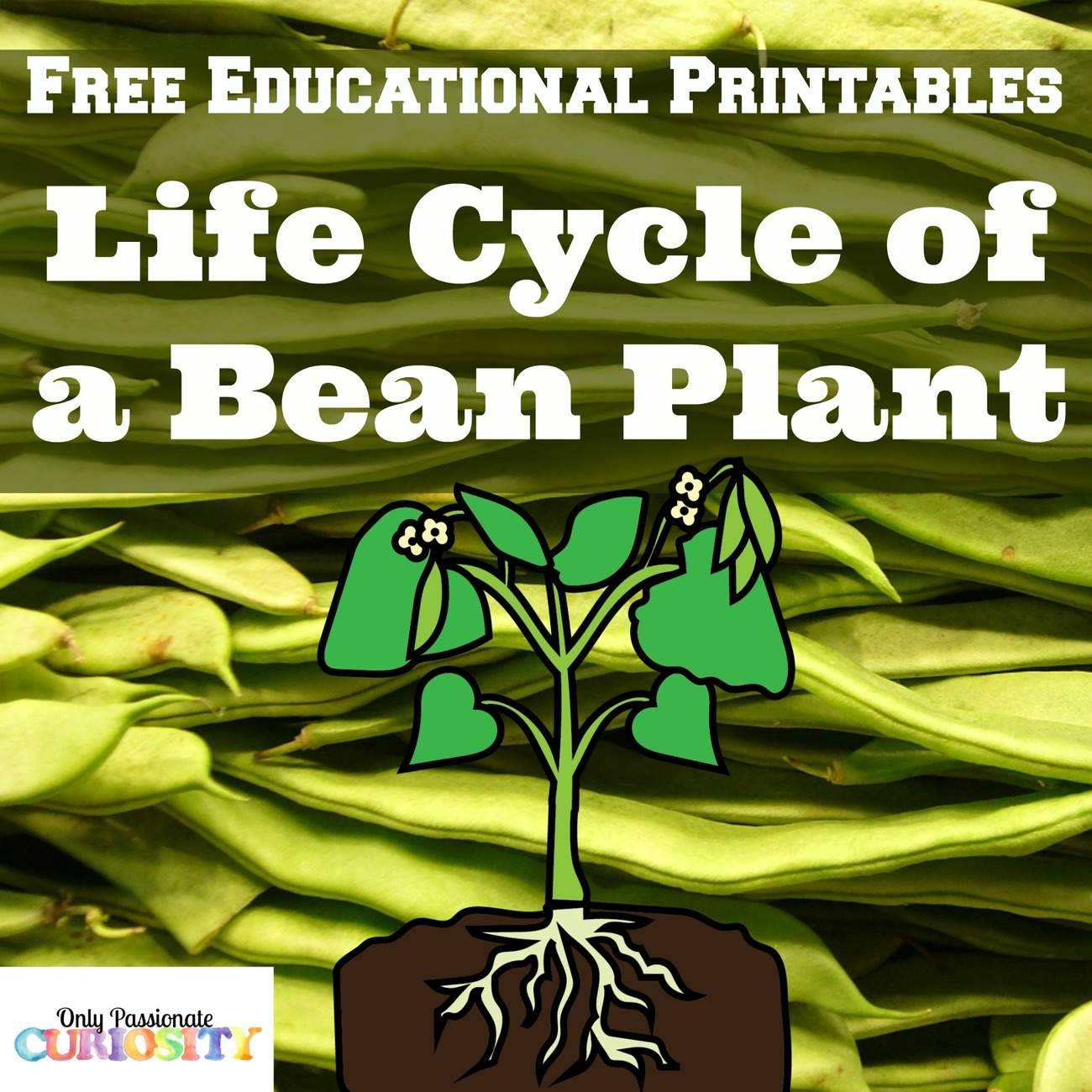 Plant Life Cycles Free Printable
