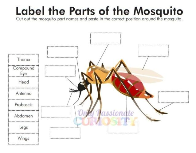 All About Mosquitoes-Life Cycle Unit Study - Only ...