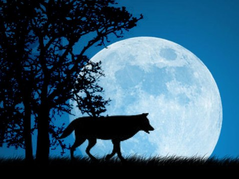 IL MITO DELLULULATO  WolfWorld