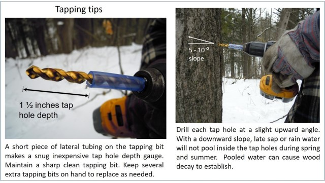 """Tapping tips. Two images. The caption on the leftmost image shows a drill with a piece of blue lateral tubing covering half of it. The exposed part is labeled """"1.5 inches tap hole depth"""". The caption says """"A short piece of lateral tubing on the tapping big makes a snug inexpensive tap hole depth gauge. Maintain a sharp clean tapping bit. Keep several extra tapping bits on hand to replace as needed"""". The rightmost image shows someone drilling into a tree. The angle of the drill is at a 5-10 degree slope. The caption ssays """"Drill each tap hole at a slight upward angle. With a downward slope, late sap or rain water will not pool inside the tap holes during spring and summer. Pooled water can cause wood decay to establish""""."""