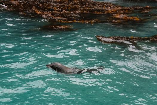 nouvelle zélande animaux marins