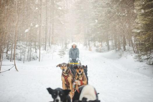 chiens de traîneau au Québec en hiver