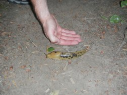 HUGE slugs too!