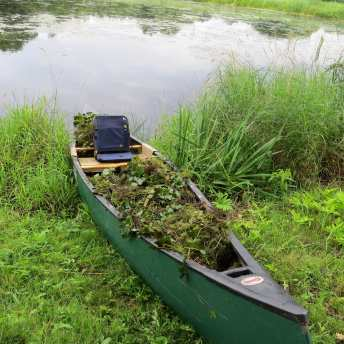 Tim Johnston's canoe filled with water chestnut plants from Sage Creek.
