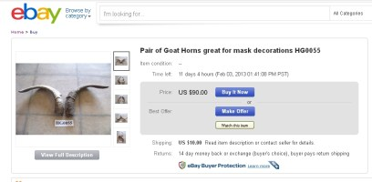 Goat horns for sale on eBay