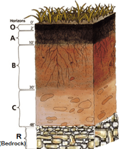 A typical soil profile, with O, A, B, C, and R horizons.