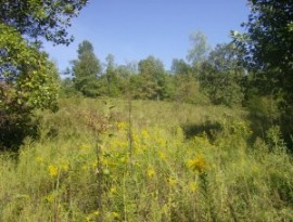 Here's an overgrown pasture that could be available for lease.