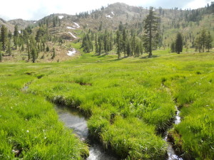 A stream runs through a meadow in Klamath National Froest, a site sampled for a UC Davis study on cattle grazing, water quality and public recreation. Photo courtesy of UC Davis.